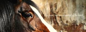 Art of Equus Blog